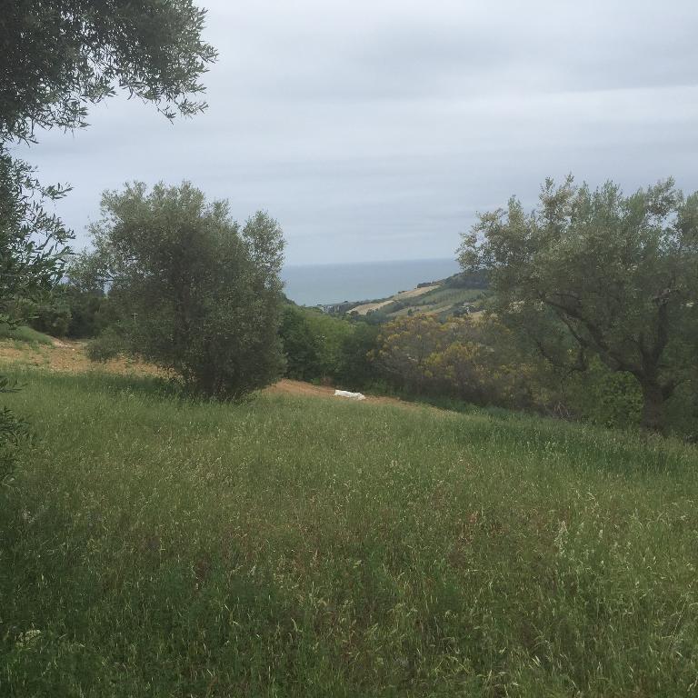 Azienda Agricola in Vendita CAMPOFILONE